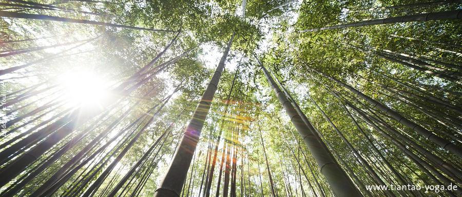 bamboo_NL